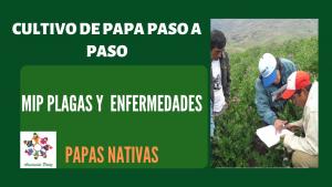MIP Plagas y Enfermedades de papas nativas – UC 5 – E 2