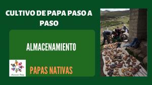 Almacenamiento de papas nativas - UC 5 - E 4