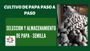 Selección y almacenamiento de semilla – UC 1 – E 1