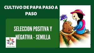 Selección positiva y negativa en papa – UC 1 – E 2