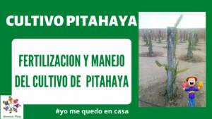Fertilización y Manejo del cultivo de Pitahaya. Mod. 3