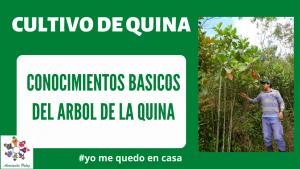 Conocimientos básicos para el reconocimiento del árbol de la quina - Módulo 1