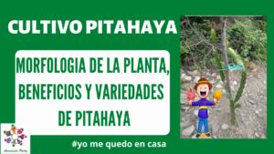 Morfología, Variedades y Beneficios del cultivo de Pitahaya Mod.1