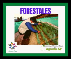 Forestales 馃尣